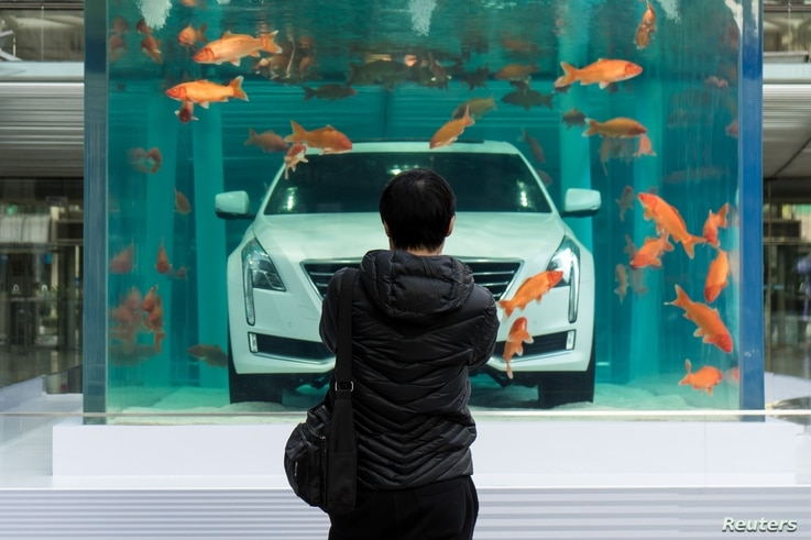 A man looks at a Cadillac CT6 displayed inside a fish tank during an event promoting the car's environmental-friendly features, in Shanghai, China, February 25, 2016.