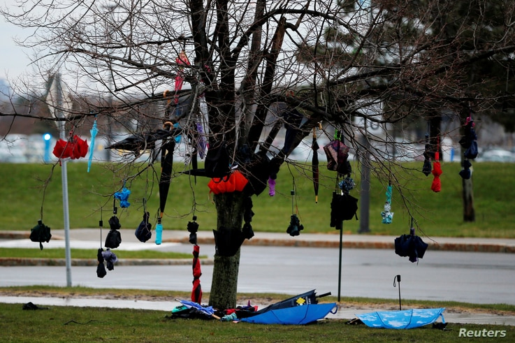 Umbrellas hang from a tree outside a U.S. Democratic presidential candidate and U.S. Senator Bernie Sanders rally at the University of Buffalo in Buffalo, New York, April 11, 2016.