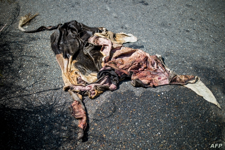 A view of a cowhide on the road near a ranch in San Silvestre, Barinas State, Venezuela, Nov. 28, 2018.