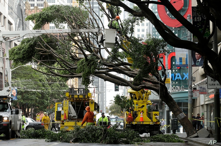 Workers remove branches from a tree on Mission Street in San Francisco, Jan. 17, 2019. Heavy rain, snow and wind pummeled much of California Thursday, causing at least six deaths, leaving thousands without power and forcing wildfire victims to flee t...