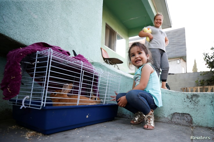 Three-year-old Kendra Nicole Rojas plays with pet bunnies at her uncle's home where she and her mother Karla Rojas, 26, right, used to live but moved out after lead paint was found in the home in the Historic South Central neighborhood of Los Angeles...