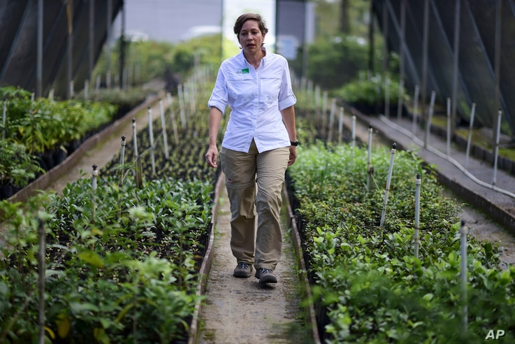"""Luisa Rosado Seijo, manager of the ecological recovery program developed by Para la Naturaleza, a nonprofit organization, tours one of the NGO's nurseries in the in Rio Piedras Botanical Garden, in San Juan, Puerto Rico. """"This is a project where we ..."""