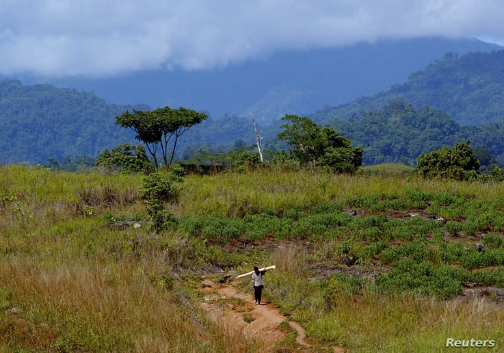 FILE - A man returning from the jungle carries wood toward a refugee camp just outside the Solomon Island's capital Honiara, July 23, 2003.