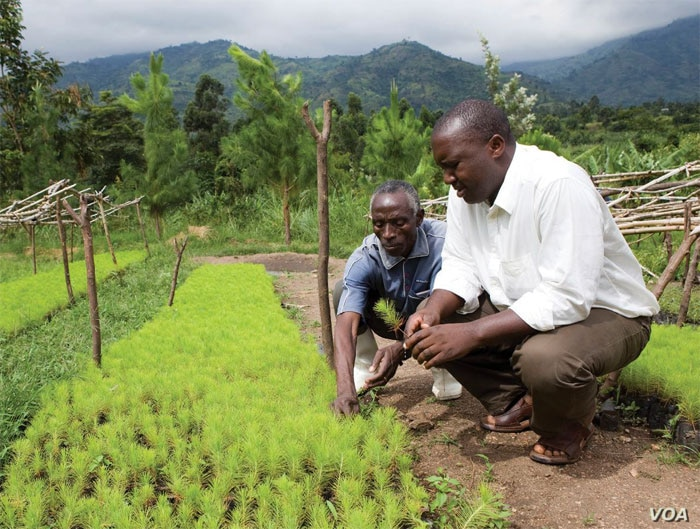 """Rwenzori Mountains, Uganda. WWF has helped 574 farmers in the region plant 700,000 trees in its 5-year programme to replenish the bare hills. Many farmers in the region are switching to """"drought-resistant"""" crops that include pineapple, mangoes, b..."""