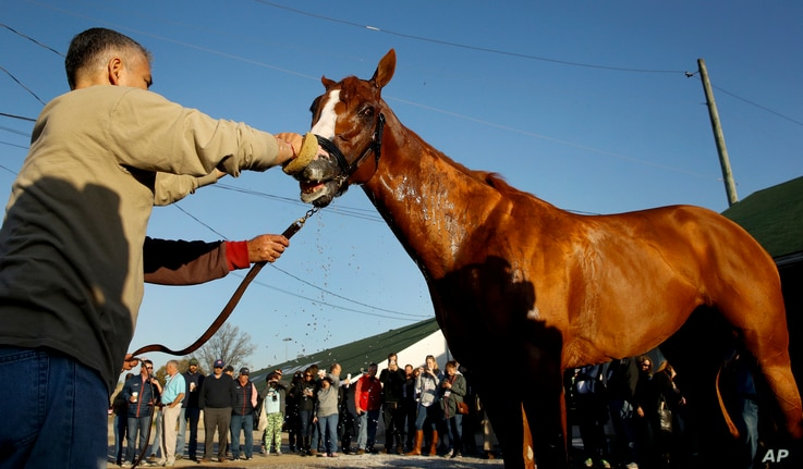 Kentucky Derby hopeful Justify gets a bath after a morning workout at Churchill Downs, May 1, 2018, in Louisville, Ky.