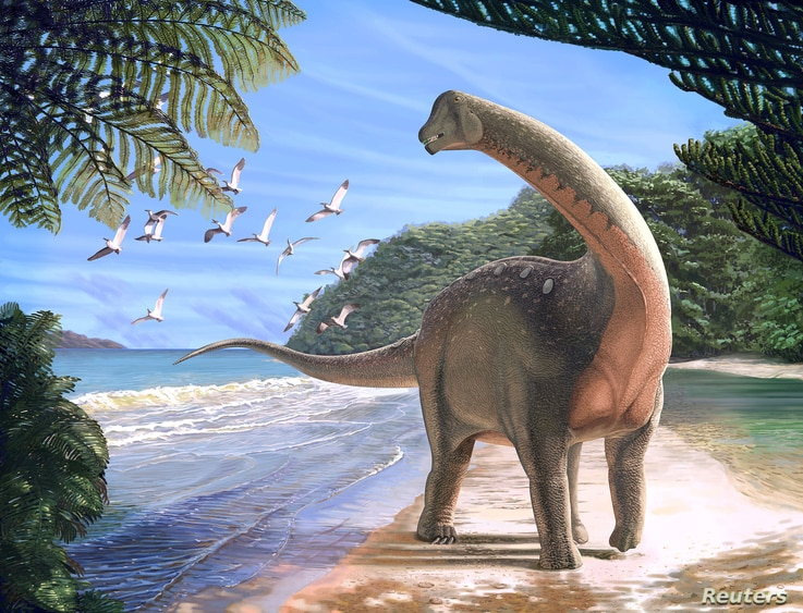 Artist's life reconstruction of the titanosaurian dinosaur Mansourasaurus shahinae on a coastline in what is now the Western Desert of Egypt approximately 80 million years ago is pictured in this undated handout image obtained by Reuters Jan. 29, 201...