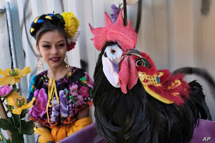 A Mexican dancer looks at a Chico McRooster at the Chinatown's 119th annual Golden Dragon Parade to celebrate the Year of the Dog, with firecrackers, dragon dancers, floats and bands in Los Angeles, Feb. 17, 2018.