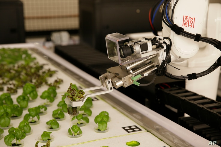 In this Sept. 27, 2018, photo a robotic arm lifts plants being grown at Iron Ox, a robotic indoor farm, in San Carlos, California.