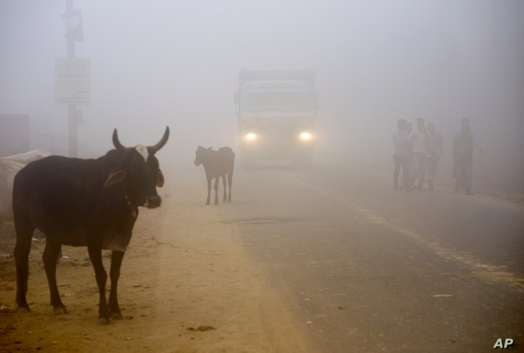 Cows stand by the side of a road as a truck drives with lights on through smog in Greater Noida, near New Delhi, India, Wednesday, Nov. 8, 2017.