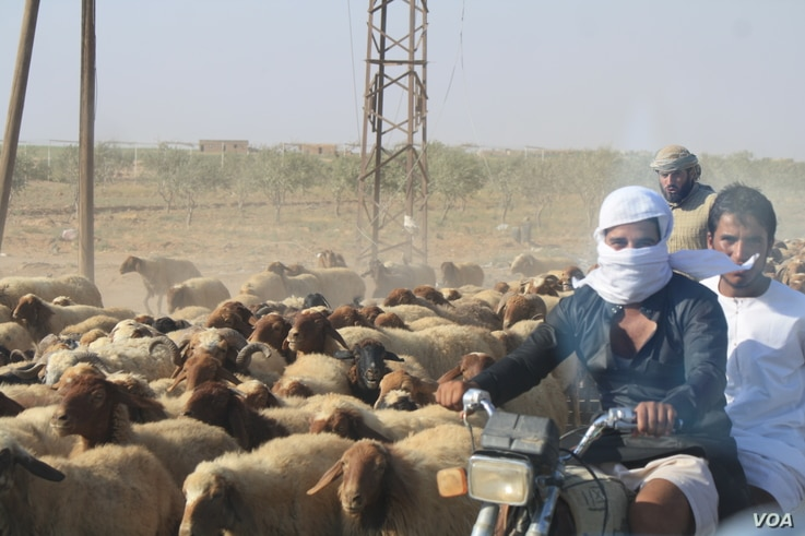 Farming is the main industry for many Syrian villagers, a profession that often yields just enough profits for survival.  High taxes and corruption under IS rule was more difficult than extreme ideologies for many rural farmers, near Sarran, Syria, A...