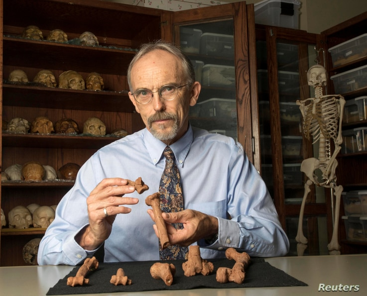 Paleoanthropologist John Kappelman is seen with 3-D printouts of Lucy's skeleton illustrating the compressive fractures in her right humerus that she suffered at the time of her death 3.18 million years ago in this image from the University of Texa...