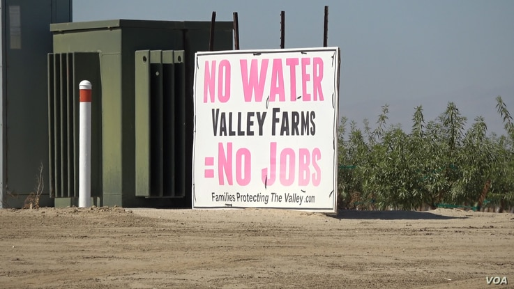 Central Valley farmers worry about the loss of crops and jobs if water reductions force cutbacks in growing. (Screen grab from video by M. O'Sullivan/VOA)