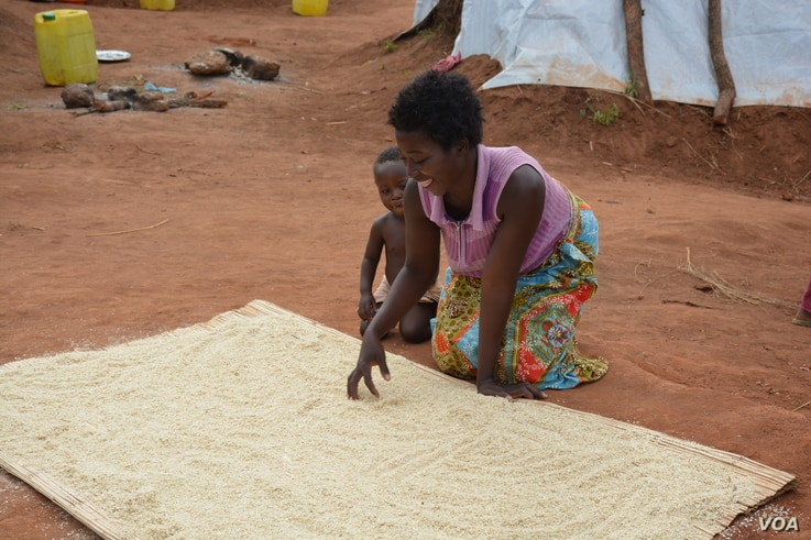 Sign of food shortage: a woman in Souther district of Mwanza dries maize husks in the sun, readying them for milling. (L. Masina/VOA)