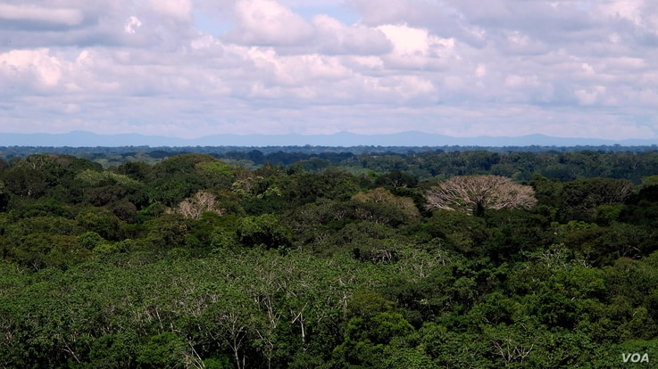 The Carnegie Institution Spectranomics project debut study collected and analyzed foliage from 3,560 canopies across 19 forests in Peru, including this lowland area. (Greg Asner)