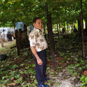 Ong Hock Huat, surrounded by his passion fruit plants that he grows just outside his home. He believes that the fruits have cancer-preventing properties.