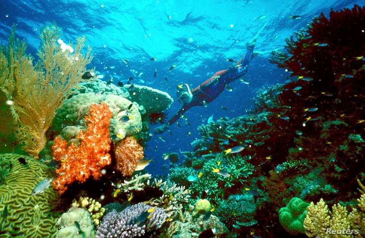 Attempts to Save the Great Barrier Reef Not Working
