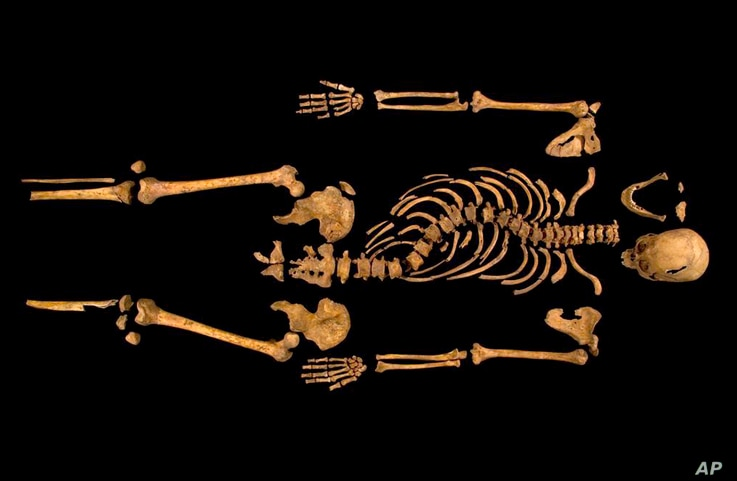 A photo made available by the University of Leicester of the remains of England's King Richard III found underneath a car park last September at the Grey Friars excavation in Leicester, Britain.