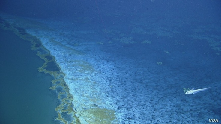 The brine pool has its own shoreline, with minerals seeping over the edge and cascading down its sides.