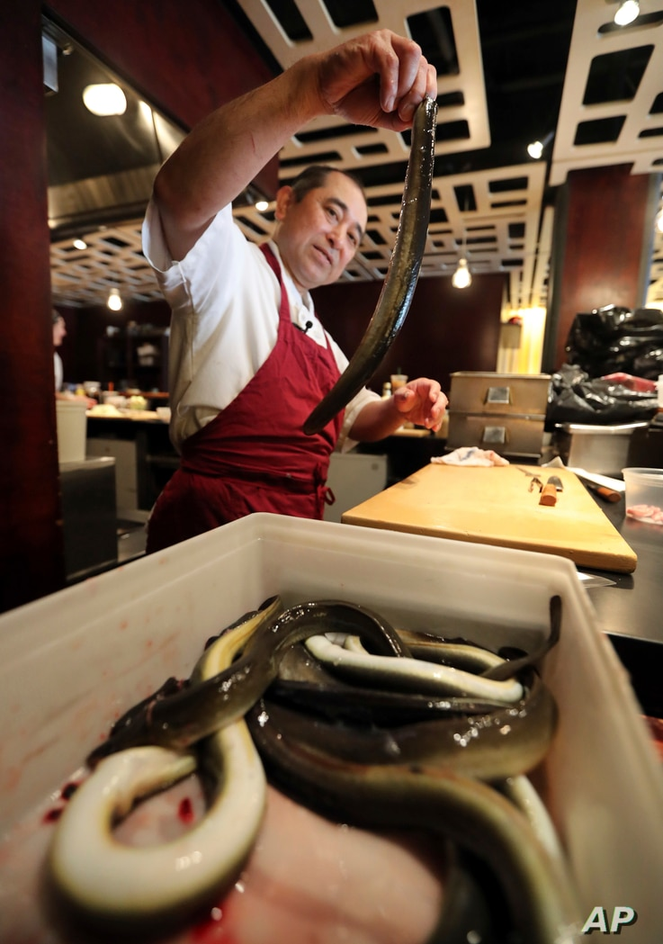 FILE - Chef Masa Miyake prepares to clean and cook eels at his Japanese restaurant, in Portland, Maine, July 20, 2017.