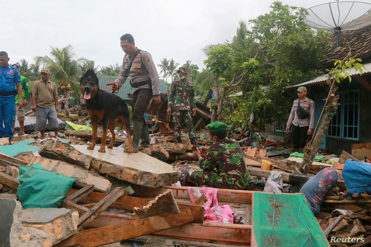 Rescue workers use a dog to search for victims, Dec. 25, 2018, among debris scattered by the tsunami that hit Sunda Strait at Rajabasa in South Lampung, Indonesia.