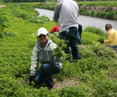 The three-day program included conservation activities like pulling invasive weeds from banks of the Platte River.