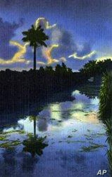 This lovely photo of the Everglades at dusk was made into a postcard in the early 1900s.