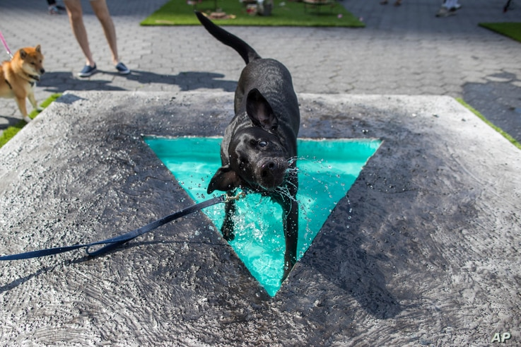 "Jax Reilly, a black labrador, cools off in Eleanna Anagnos' ""Penumbra Oasis"" at dOGUMENTA (I) NYC, Aug. 11, 2017, in New York. The art show, featuring 10 sculptures and installations created for dogs, runs through Aug. 13 at Brookfield Place in Lower..."