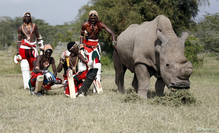 """FILE - Members of the Maasai Cricket Warriors pose with the last surviving male northern white rhino named Sudan after playing in a charity tournament called the """"Last Male Standing"""" at the Ol Pejeta Conservancy in Laikipia national park, Kenya, June..."""