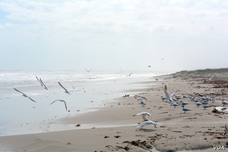 Padre Island National Seashore is the longest stretch of undeveloped barrier island in the world.