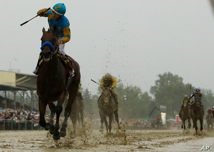 American Pharoah, ridden by Victor Espinoza  wins the 140th Preakness Stakes at Pimlico Race Course in Baltimore, May 16, 2015.