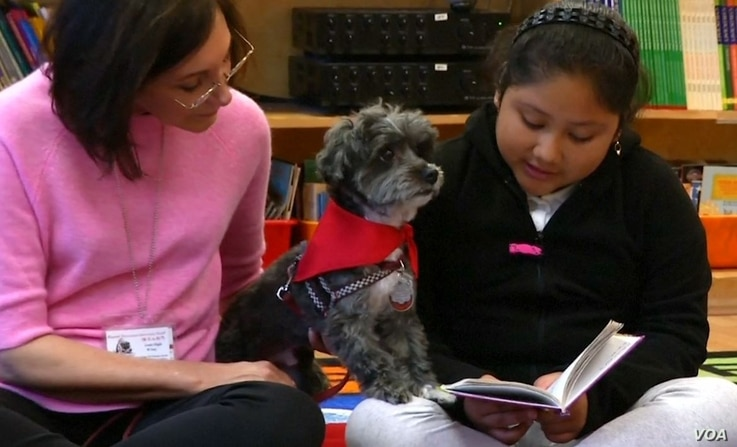 """Public School 57 third-grader Aelane Vasquez reads to Izzy, a Havanese therapy dog. """"I love reading to Izzy because he listens to me, and he doesn't make fun of me when I make a mistake,"""" she says."""