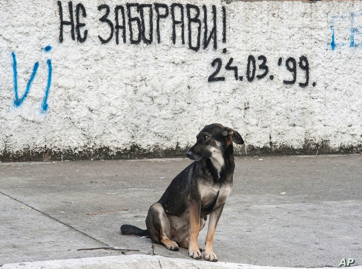 """FILE - A dog sits on a street in Podgorica, Montenegro, by graffiti that reads: """"Don't forget! March 24, 1999"""" — the day when NATO began airstrikes, attacking Serbia and Montenegro."""