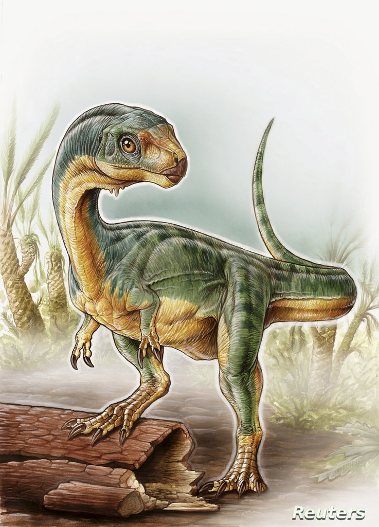 An artist's depiction shows the Chilesaurus diegosuarezi in this undated handout illustration provided by the University of Birmingham in Birmingham, Alabama, April 27, 2015.