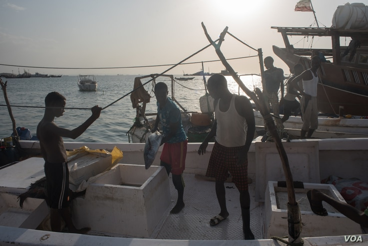 Fishermen pass their catch onto shore in the harbor of Berbera, Somaliland, Aug. 16, 2016. (J. Patinkin/VOA)