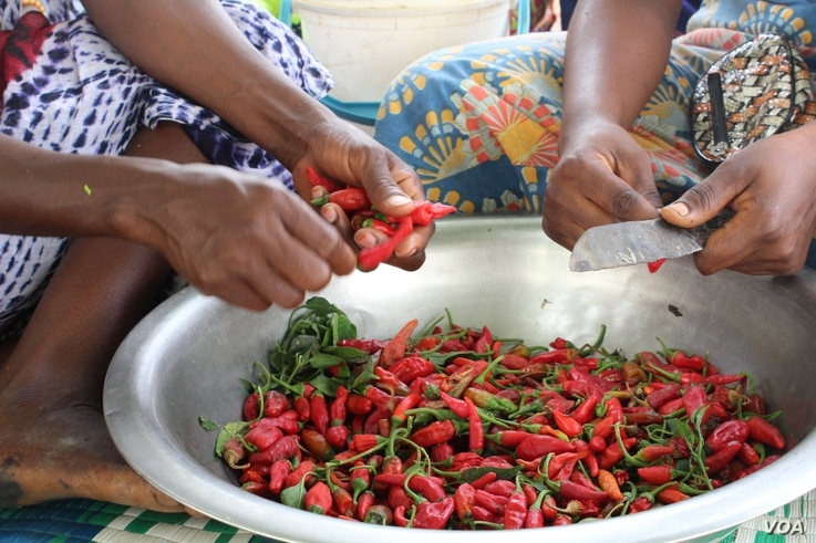 Women in the village of Ballel Pathé prepare chili peppers collected from the fields, in Senegal's Matam region, May 18, 2017. (S. Christensen/VOA)