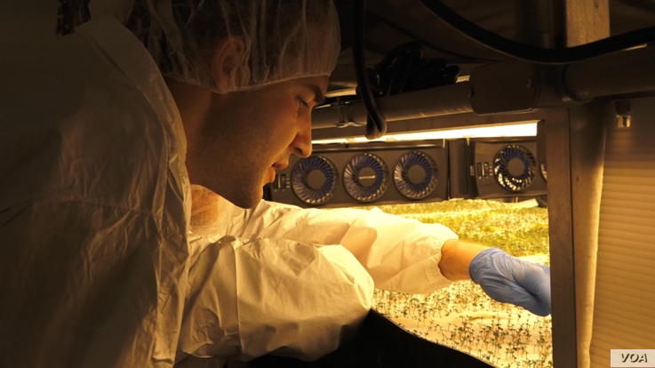 """Indoor plants - AeroFarms workers manage their greens from """"seed-to-package."""" The process utilizes 95% less water than traditional farming. (Courtesy: R. Taylor)"""