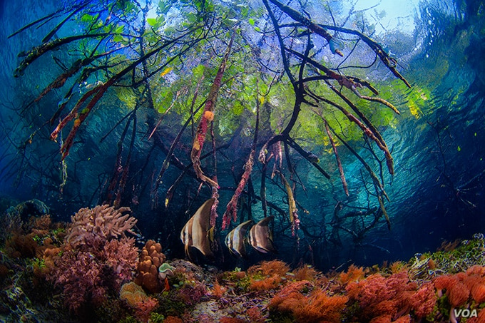 Coral reefs like this one in Raja Ampat, Indonesia are at great risk if the planet warms two degrees Celsius higher than pre-industrial times.