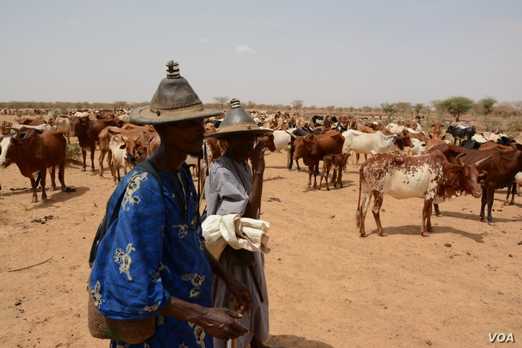 Cattle herders just south of Douentza, Mali, June 24, 2016.