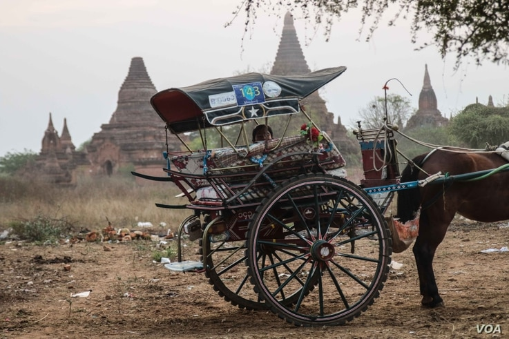 A driver of a horse-drawn cart - a popular way of seeing Bagan -  waits for tourists to return from a nearby temple.  (Photo: John Owens for VOA)