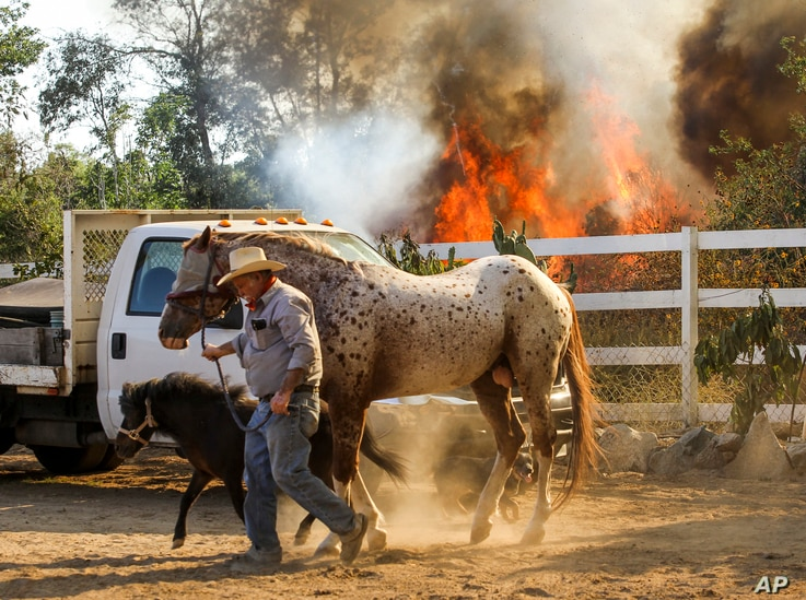 Jimmy Romo, 73, leads the horses leaving his ranch as a wildfire is burning in Azusa, California, June 20, 2016.