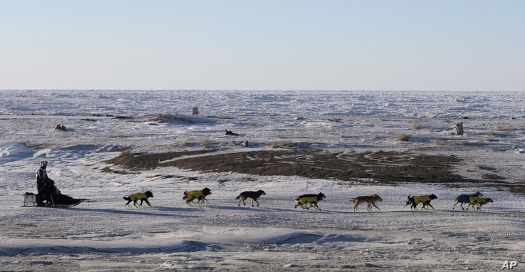 FILE - A musher and his dogs race along the frozen Bering Sea coast outside Nome, Alaska, March 16, 2016.