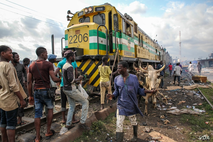 Cattle are offloaded from a freight train at the Oko-Oba abattoir in Lagos, Nigeria, Sept. 3, 2016. (C. Stein/VOA)