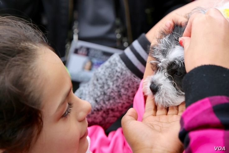 A young girl pets a small puppy dog at the Puppy Bowl exhibition, part of the Super Bowl Live fan festival in Houston, Texas. (B. Allen/VOA)