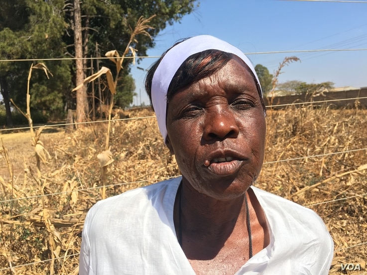 Mirriam Chagweja, 61, is one of the farmers who have benefited from the FAO's biofortified maize and beans program funded by the British government. (S. Mhofu/VOA)
