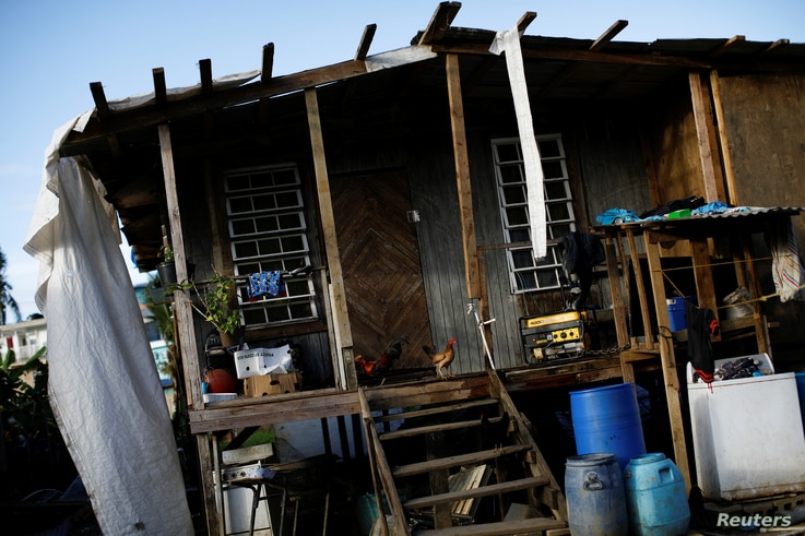 Chickens stand at the entrance to a house that was damaged by Hurricane Maria, at the squatter community of Villa Hugo in Canovanas, Puerto Rico, Dec. 11, 2017.
