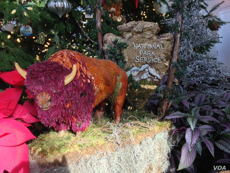 A replica of an American bison, made entirely out of plant materials, dominates the area just below a giant Christmas tree at the US Botanic Garden's holiday display in Washington.