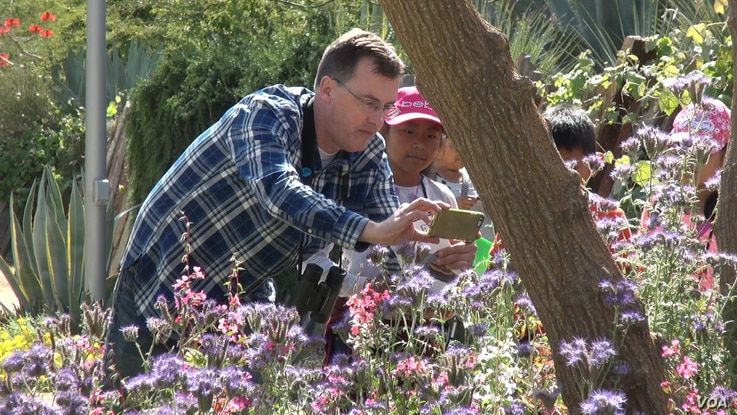 Principal Brad Rumble of Esperanza Elementary School in Los Angeles helps students document plant species. (M. O'Sullivan/VOA)
