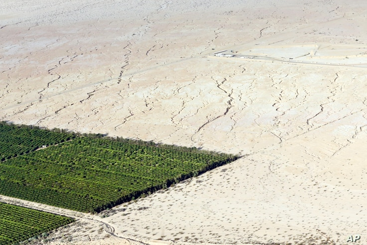 Irrigated citrus trees sit surrounded by bone-dry land near Westmorland, California, May 1, 2015. The Imperial Valley's half-million acres of verdant fields end abruptly in pale dirt that gets three inches of rain annually on average.