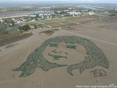 The face of a young Spanish girl was one of more than a dozen public art installations across the planet photographed by satellite and aimed at raising awareness about climate change.