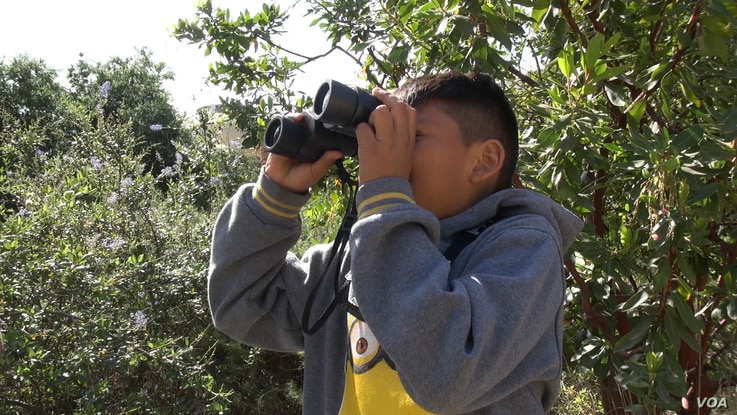 Frank Az, 9, a student at Esperanza Elementary School in Los Angeles, scans an area for bird species. (M. O'Sullivan/VOA)